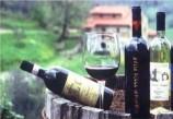 Weingut Toskana