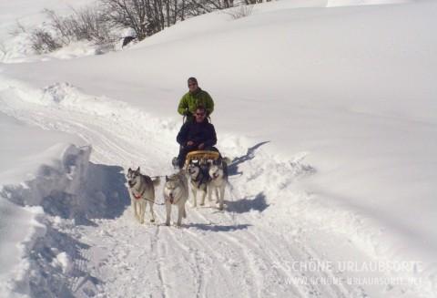 Schlittenhunde-Erlebnis auf 1600 Meter über Meer