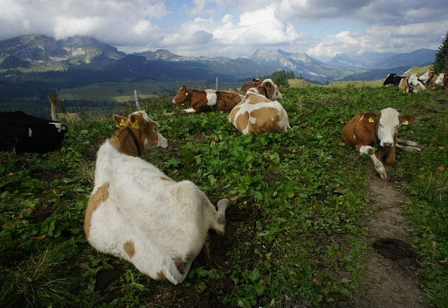 Bed & Breakfast - Jungfrau-Region - Lavendelhaus
